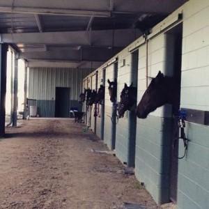 Back Side of Stalls-resized